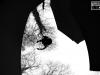 parkour-drole-d-oiseau